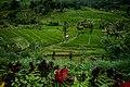 Senganan, Penebel, Tabanan Regency, Bali, Indonesia - panoramio.jpg