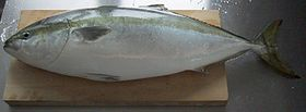 Seriola on cutting board.jpg