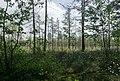 Sestroretsk swamp 2020-06-07-3.jpg