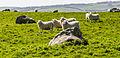 Sheep happens.jpg