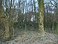 Single strand barbed wire fence through woodland - geograph.org.uk - 1073890.jpg