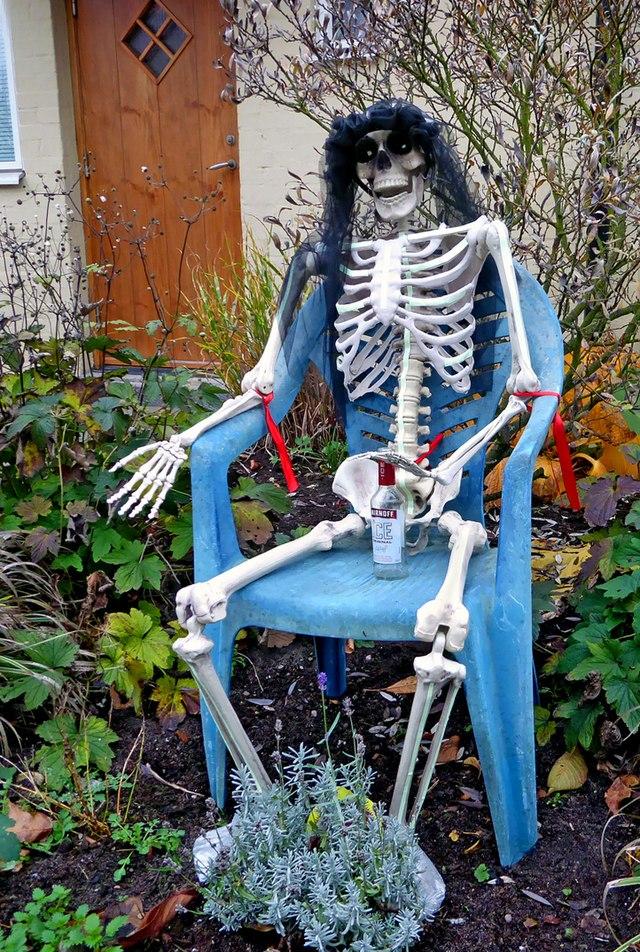 läran om skelettet