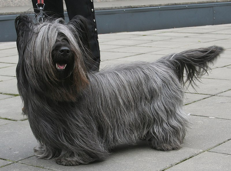 Notably Unique Longhaired Long Bodied But Short Legged