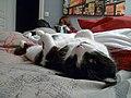 Sleeping cat and reading girl (1).jpg