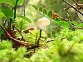 Small mushroom.jpg