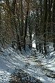 Sneeuw in Meerdaalbos - 373091 - onroerenderfgoed.jpg