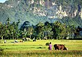 Somewhere Sumatra.jpg