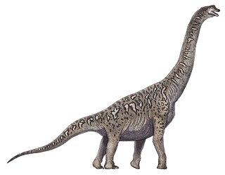 <i>Soriatitan</i> genus of sauropod dinosaur found in Spain