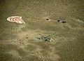 Soyuz TMA-11M Landing (4).jpg