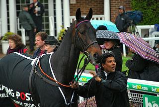 Sprinter Sacre National hunt race horse