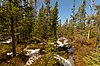 Spruce Grouse Swamp.jpg