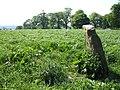 Standing stone at Gorteen - geograph.org.uk - 423303.jpg