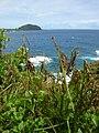 Starr-050405-5682-Solanum americanum-habitat-Alau-Maui (24114429164).jpg