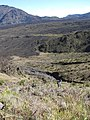 Starr-091207-0299-Holcus lanatus-habit with Kim-West Rim wall Haleakala National Park-Maui (24991573155).jpg