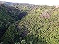 Starr-141014-2194-Caesalpinia decapetala-aerial view-Kakipi Gulch Haiku-Maui (25247215345).jpg