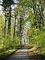Street Through Forest (105612689).jpeg