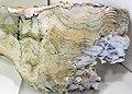 Stromatolite (Strelley Pool Formation, Paleoarchean, 3.35-3.46 Ga; East Strelley Greenstone Belt, Pilbara Craton, Western Australia) 4 (17370602842).jpg
