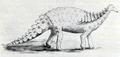 Struthiosaurus Nopsca 1915.png