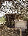 Sukkah under tree.JPG