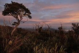 Sunrises - Mount Leuser National Park.jpg