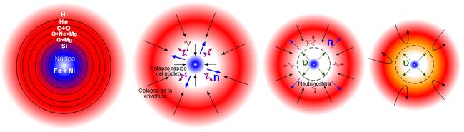 Supernova wikipedia la enciclopedia libre la primera fase de la supernova es un colapso rpido del ncleo incapaz de sostenerse esto conlleva una fuerte emisin de fotones y neutrones que son urtaz Choice Image
