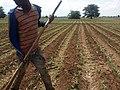 Surface irrigation.jpg