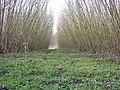 TCRVilleneuve d'AscqJanv2002.jpg
