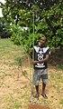 Tacca leontopetaloides - plant (6658694587).jpg