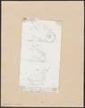 Tapirus indicus - 1700-1880 - Print - Iconographia Zoologica - Special Collections University of Amsterdam - UBA01 IZ22000299.tif