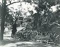 Taronga Park Zoo - 1924 (26992298782).jpg