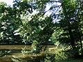 Teich am Weg mitte Park Wilhelmshöhe.jpg