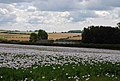 Tenantry Farm - geograph.org.uk - 498637.jpg