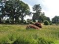 The Alpine Garden at RHS Wisley - geograph.org.uk - 847267.jpg