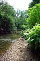 The Beam River - geograph.org.uk - 1363006.jpg