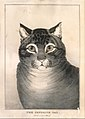 The Favorite Cat MET DT258734.jpg