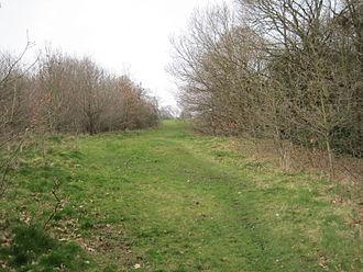 The Mill Field - Path in The Mill Field