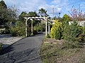 The Millennium Garden - geograph.org.uk - 450339.jpg