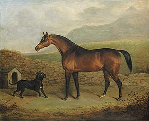"Pope (horse) - Pope, painted in 1824 by Henry Bernard Chalon when he was standing in Ireland under the name ""The Sligo Waxy."""
