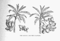 The Tropical World 41.png