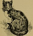 The cat, a guide to the classification and varieties of cats and a short treaties upon their care, diseases, and treatment (1895) (20592754721).jpg
