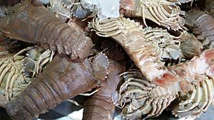 Thenus - Thenus orientalis at a market in Thailand.
