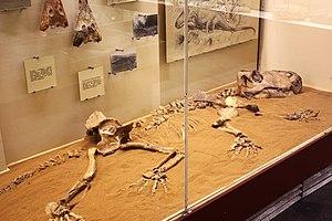 Anteosaur - Skeleton of Titanophoneus