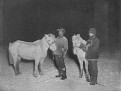 """Two men stand on snowy ground, with a dark sky background, each man with a white pony. The men are dressed in heavy winter clothing. A caption reads: """"Petty Officers Crean and Evans exercising their ponies in the winter""""."""