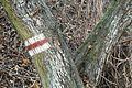 Torun red trail.JPG