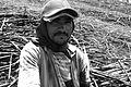 Trabalhador rural (13898976115).jpg
