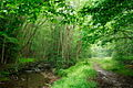 Trail-Forest-Creek - West Virginia - ForestWander.jpg