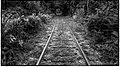 Train Tracks (6418853661).jpg