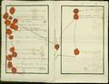 Traktat rozbiorowy 3.png
