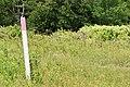 Tree Swallow on post 6 (fae9475b-fdd7-402a-abfa-0b85058c3391).JPG