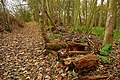Tree clearance in The Heath - geograph.org.uk - 1052800.jpg